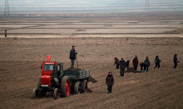 North-Koreans-farming-009